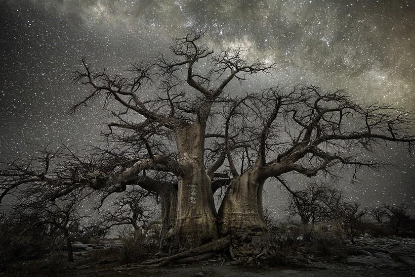 Фото вековых деревьев