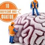 Возможности человеческого мозга. 10 фактов