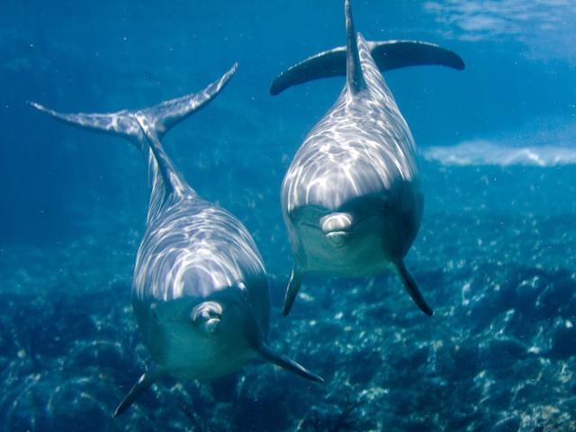 Дельфины. 10 фактов