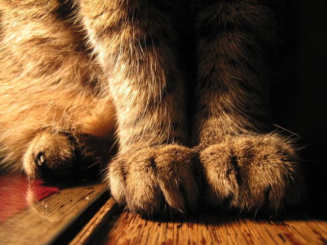 С точки зрения науки. Самые милые черты твоей кошки