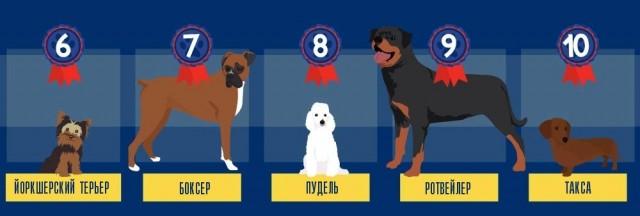 Самые популярные собаки в мире
