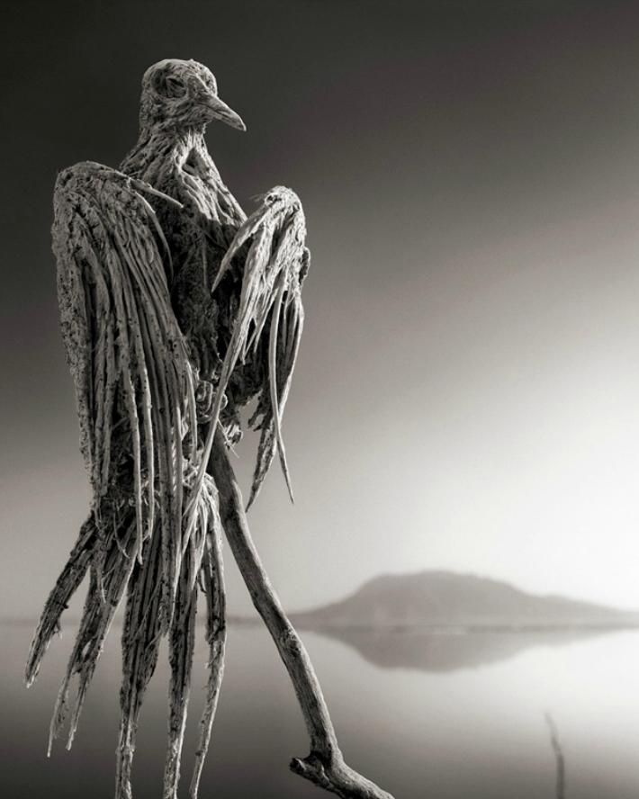 Озеро Натрон, превращающее в камень