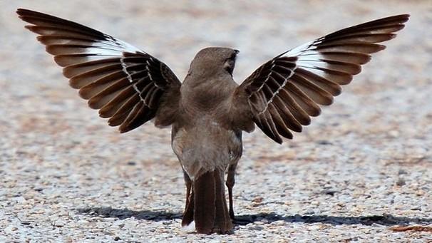 Птицы главнее на дороге