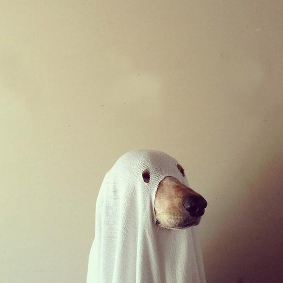 Интересные костюмы на Хэллоуин  2015