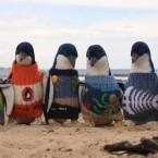 Твори добро: Австралийский дедушка спасает мини-свитерами выживших пингвинов